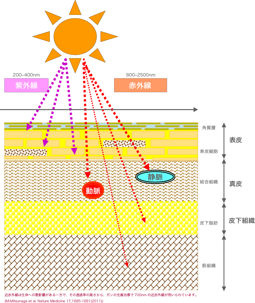 紫外線と赤外線